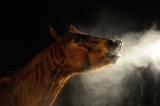 Mobile Sole-und Inhalationsanlage bis zu 4 Pferden, für Hänger, Stallbox und Inhalationszelt